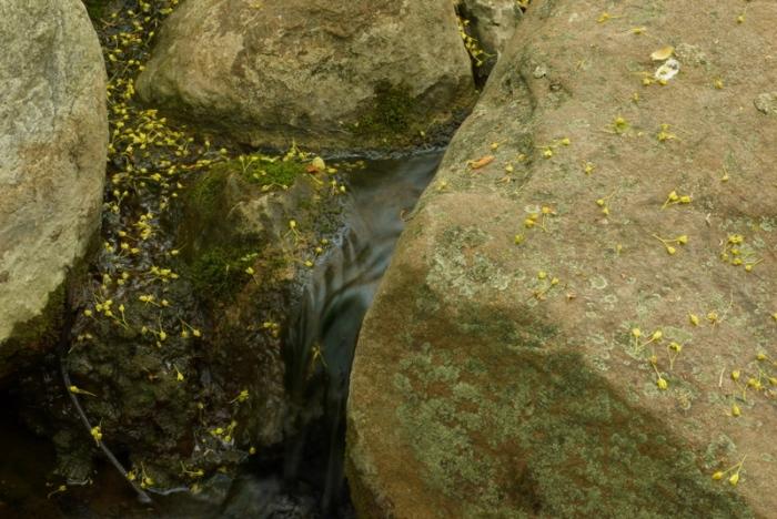 10-stream_downward plunge2