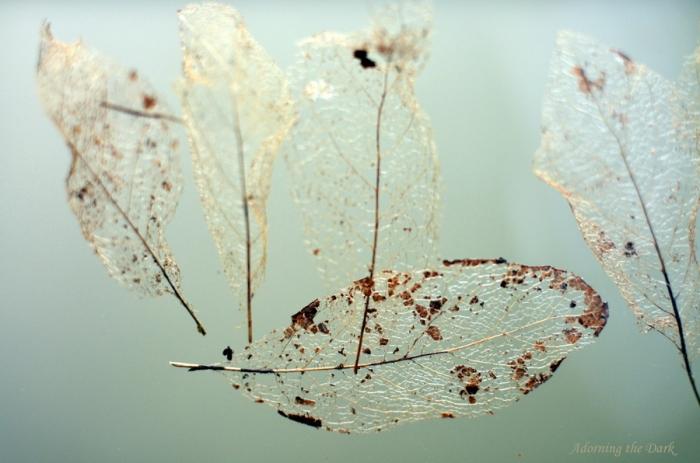 leaf skeletons_atd
