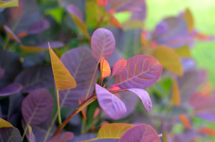 detail_colorful shrub